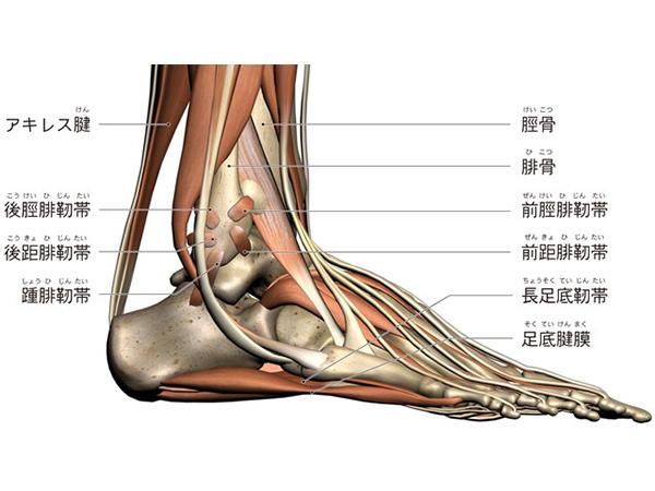 画像:足関節捻挫